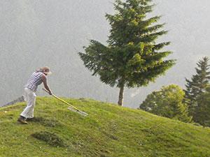 Heuen auf den steilen Berghängen
