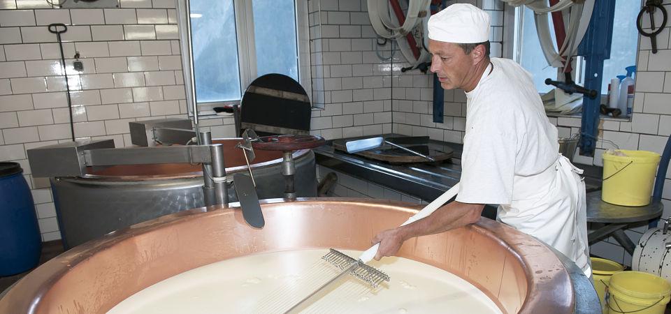 Eingedickte Milch wird mit der Harfe sorgsam zu Käsebruch geschnitten