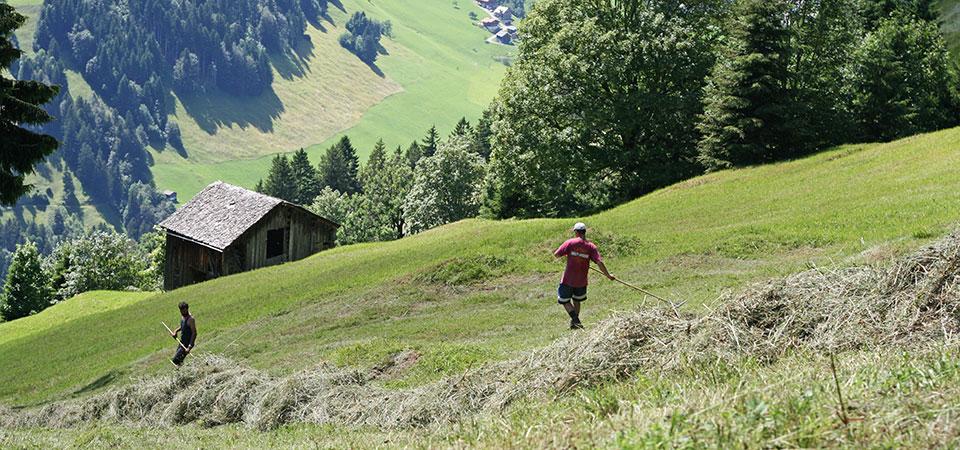 Heuernte im Juli an steilen Hängen